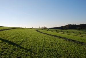 הדברה ביולוגית - כימית - חקלאות - ביתית