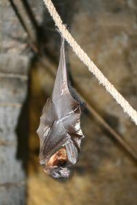 שיטות להרחקת עטלפים