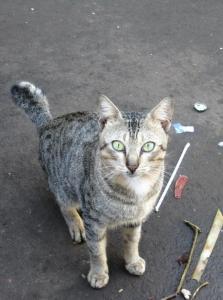 הרחקת יונקים - חתולים