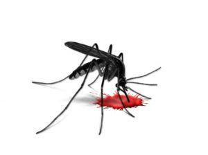 סוגי מזיקים אפשר להדביר - יתושים
