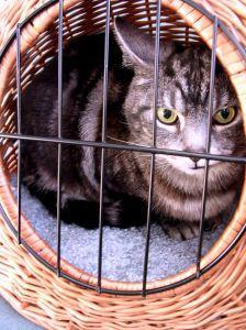 הרחקת חתולים - כלבים - מלכודות - ווטרינר העירוני